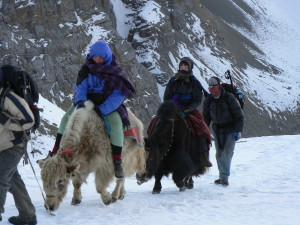 Family using Yak's to get to summit