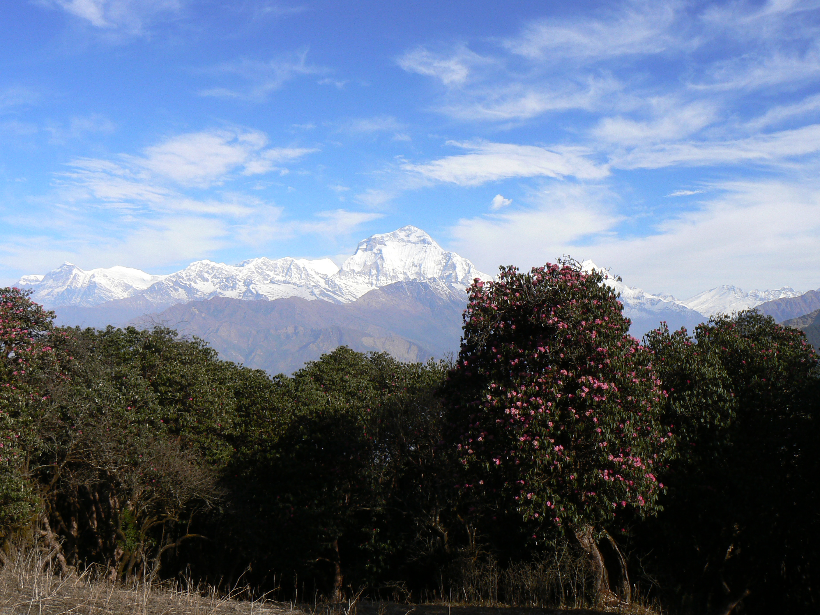 Trips of a Lifetime – The Annapurna Circuit (Day 15 to Day 19 – The End)